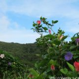 断酒主婦はるかが撮った沖縄の花
