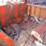 断酒主婦はるかが撮ったエジプトダハブの猫