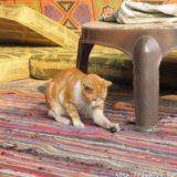 断酒主婦はるかが撮ったエジプトの猫とオリーブの実