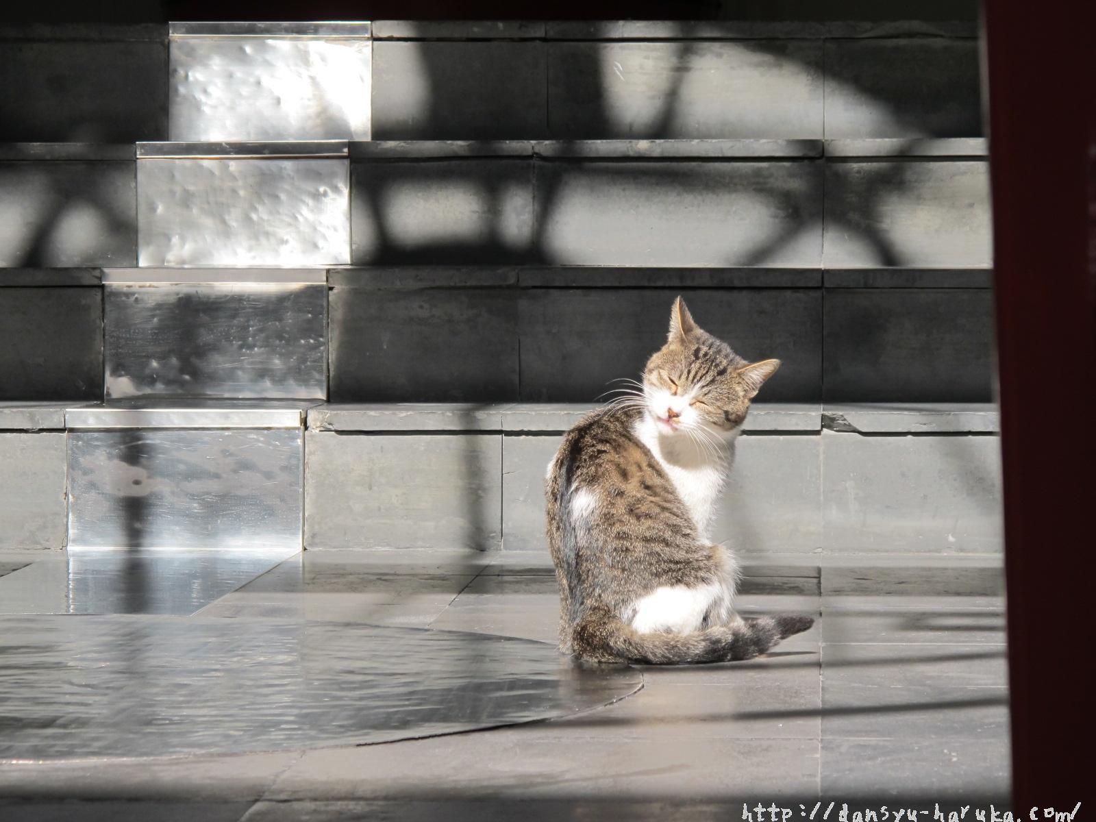 断酒主婦はるかが撮った猫