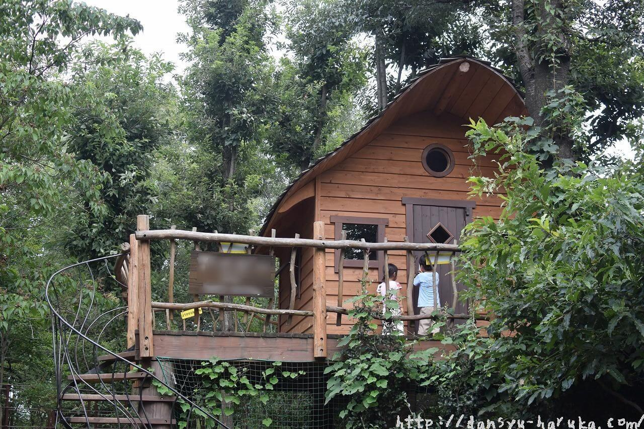断酒主婦はるかが撮ったツリーハウス
