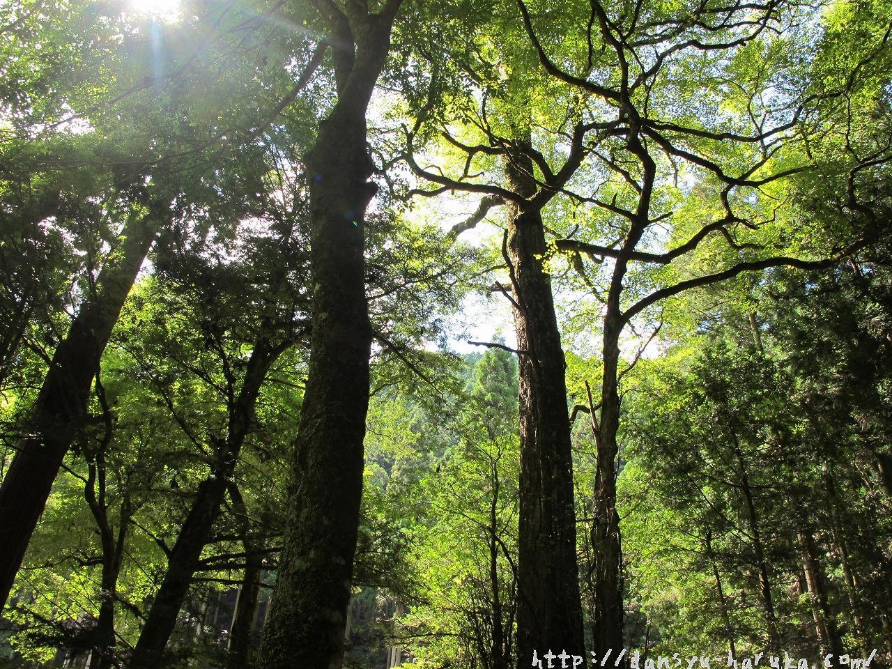 断酒主婦はるかが撮った木々