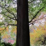 断酒主婦はるかが撮った秋の木々