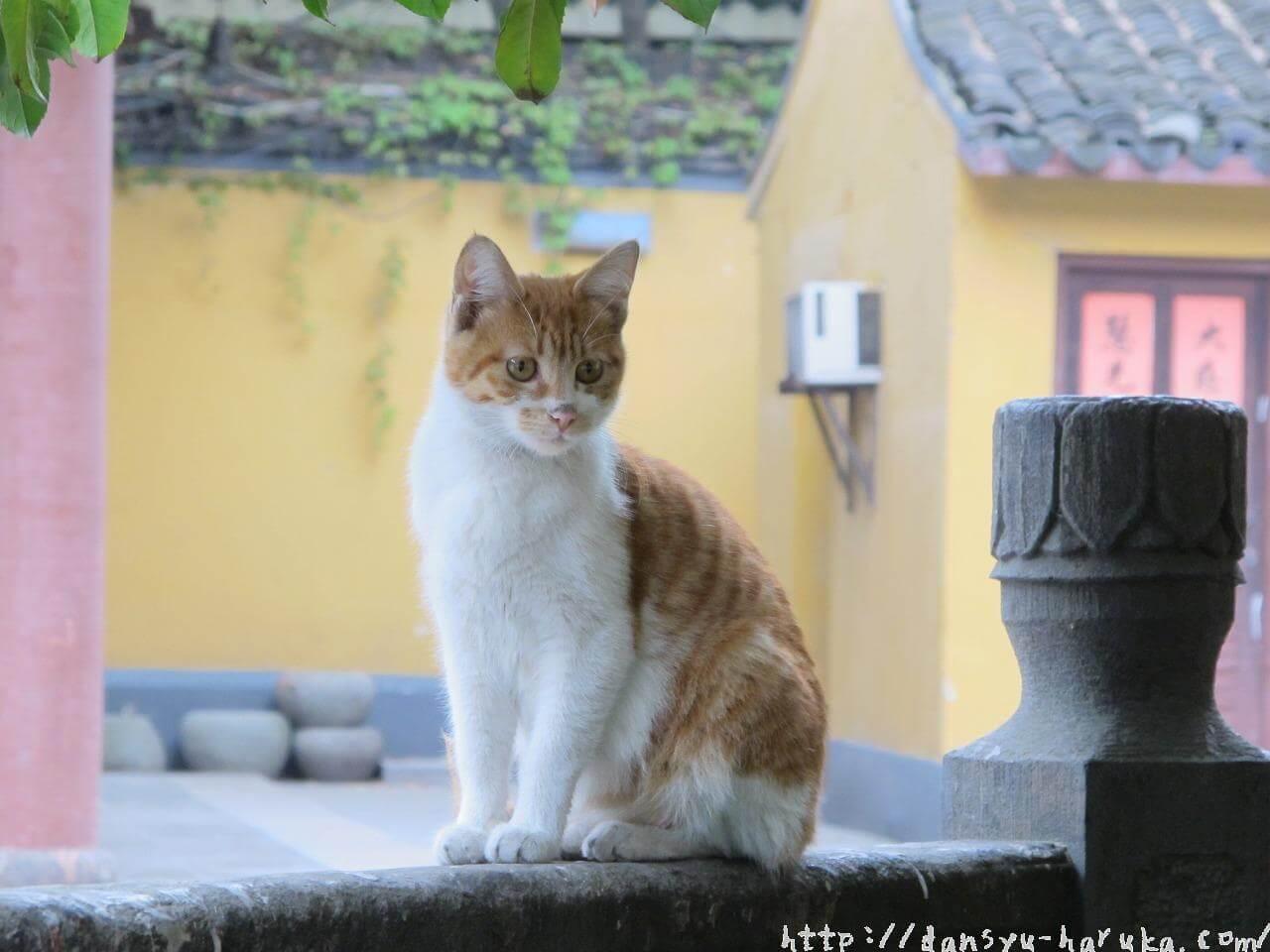断酒主婦はるかが撮った中国上海の猫