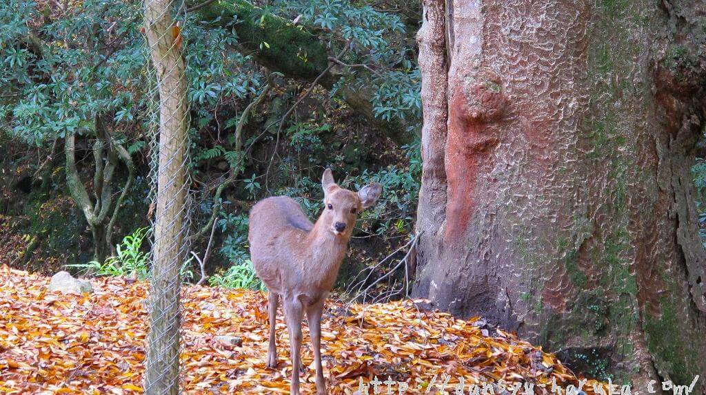 断酒主婦はるかが撮った奈良の鹿
