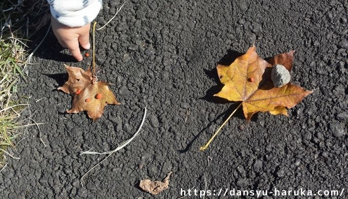断酒主婦はるかが撮った枯れ葉と子ども