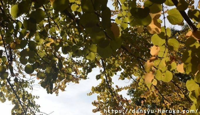 断酒主婦はるかが撮った秋の木の葉