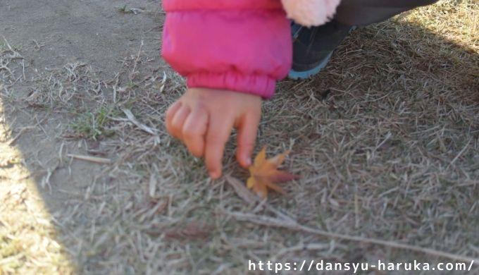 断酒主婦はるかが撮った落ち葉を拾う子ども