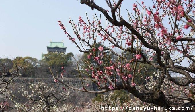断酒主婦はるかが撮った大阪城の梅林