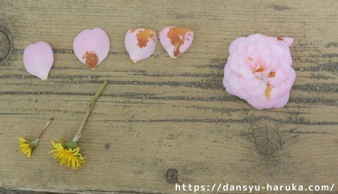 断酒主婦はるかが撮った子ども達が拾って並べたお花たち