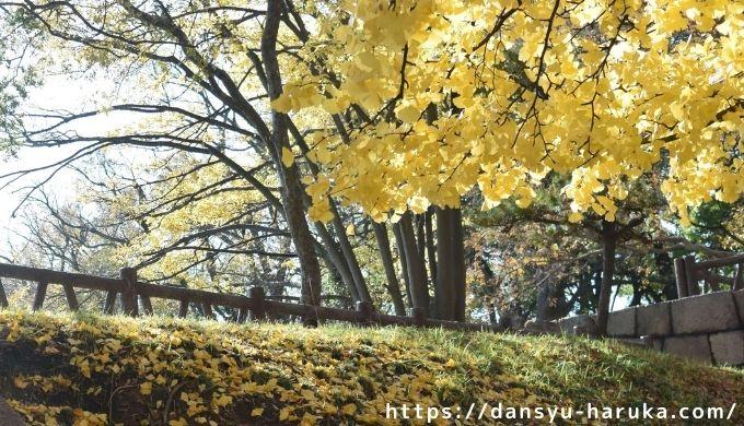 断酒主婦はるかが撮った大阪城公園の銀杏の落ち葉